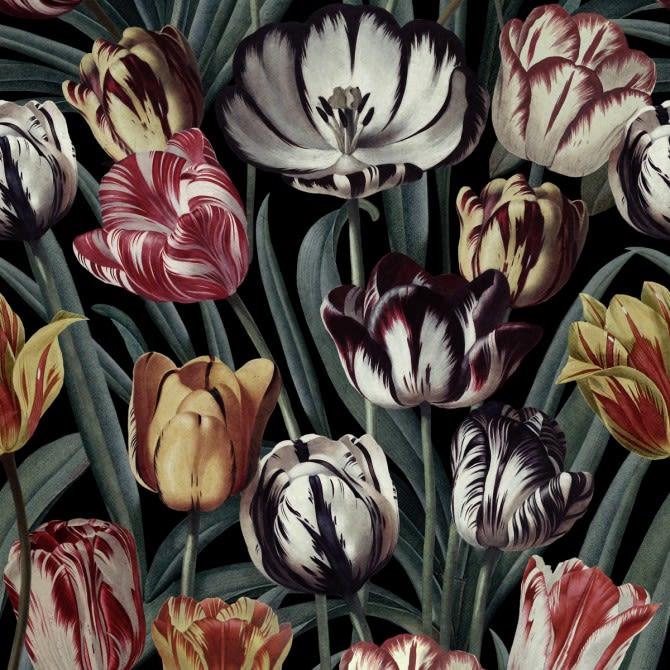 Mind The Gap,Wallpapers,botany,flower,flowering plant,petal,plant,radicchio,still life photography,tulip
