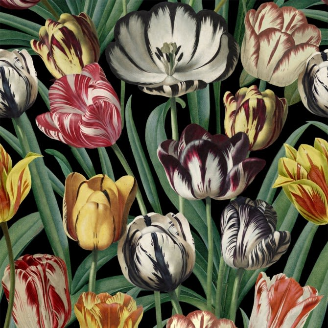 Mind The Gap,Wallpapers,botany,flower,flowering plant,lady tulip,leaf,painting,petal,plant,still life,tulip