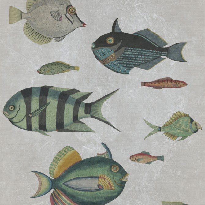 Mind The Gap,Wallpapers,fish,organism,pomacentridae