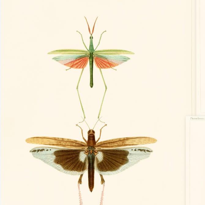 Entomology Wallpaper by Mind The Gap