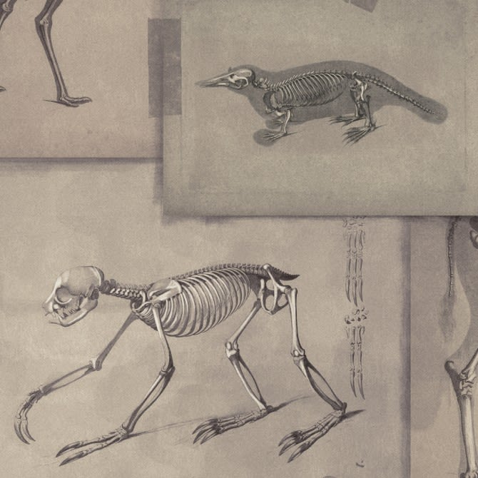 Mind The Gap,Wallpapers,dinosaur,drawing,skeleton,sketch,velociraptor