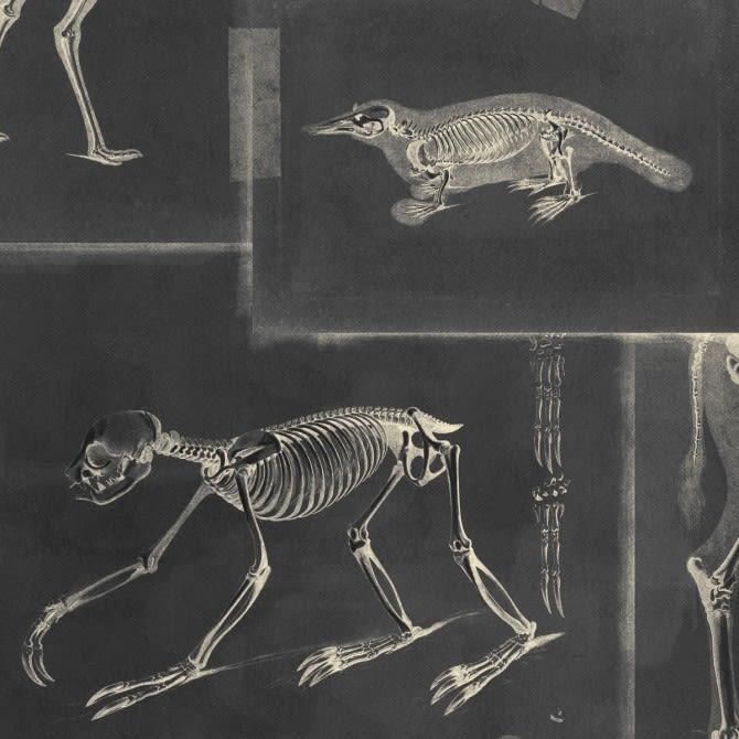 Mind The Gap,Wallpapers,dinosaur,extinction,organism,skeleton
