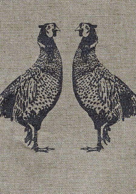 beak,bird,chicken,fowl,galliformes,illustration