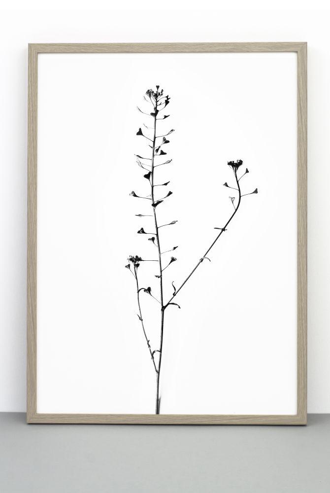 Heart Plant print,One Must Dash,Prints & Artwork,botany,branch,plant,tree,twig,white