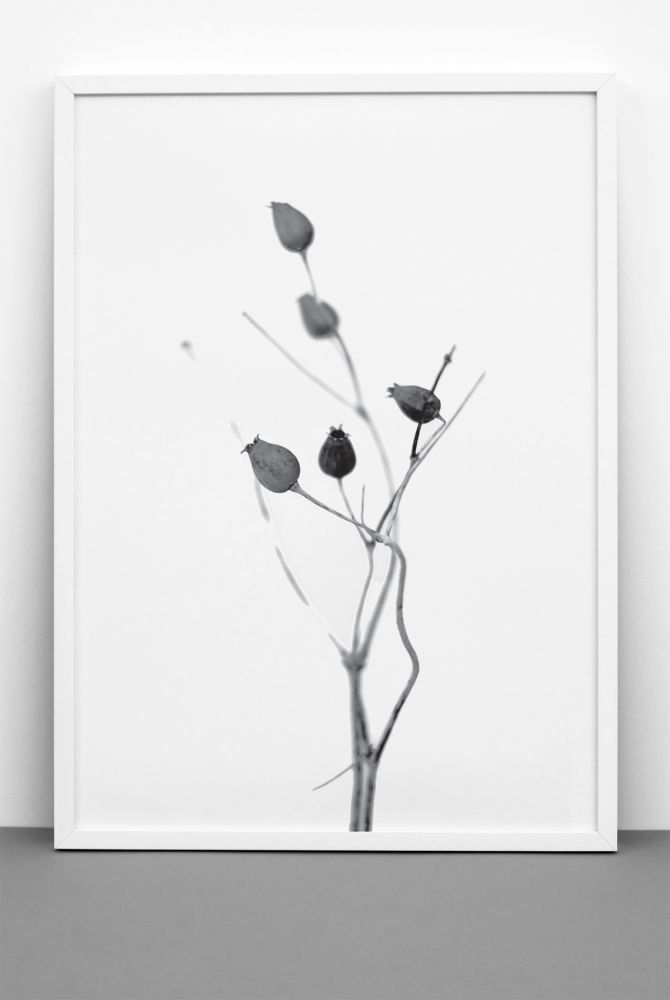 art,botany,branch,illustration,plant,tree,twig,visual arts