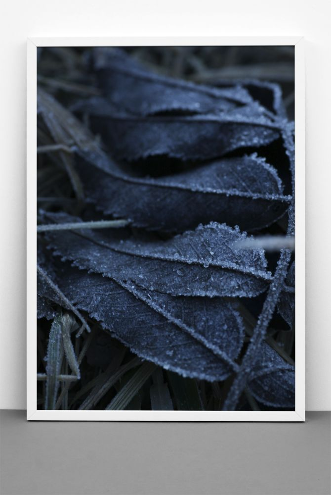FROST print,One Must Dash,Prints & Artwork,black-and-white,blue,frost,leaf,plant