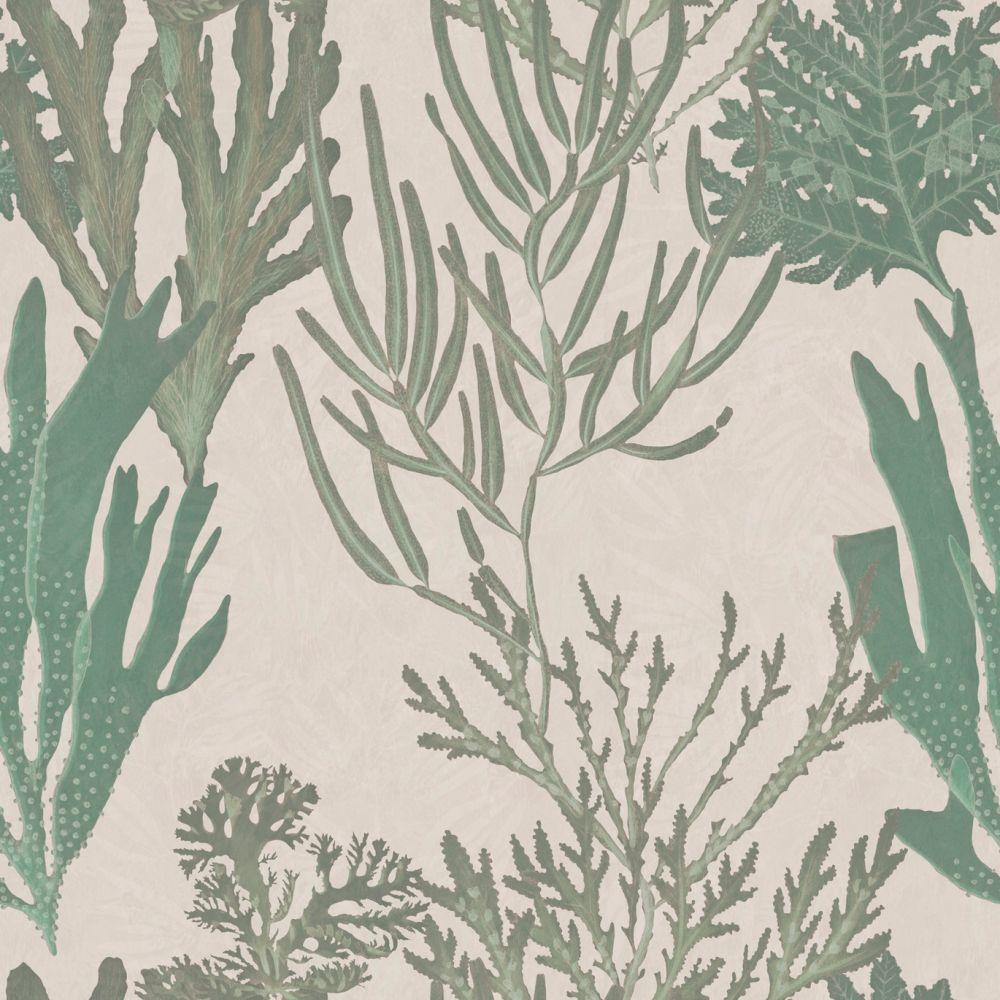 Light,Mind The Gap,Wallpapers,botany,branch,flower,leaf,plant,red juniper,river juniper,tree,twig