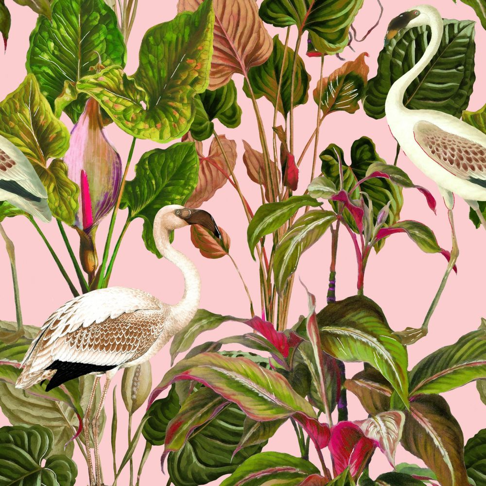 Pink,Mind The Gap,Wallpapers,anthurium,bird,botany,flower,flowering plant,houseplant,plant,water bird