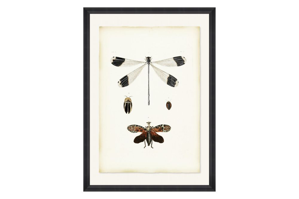 Mind The Gap,Prints & Artwork,butterfly,insect,invertebrate,moths and butterflies