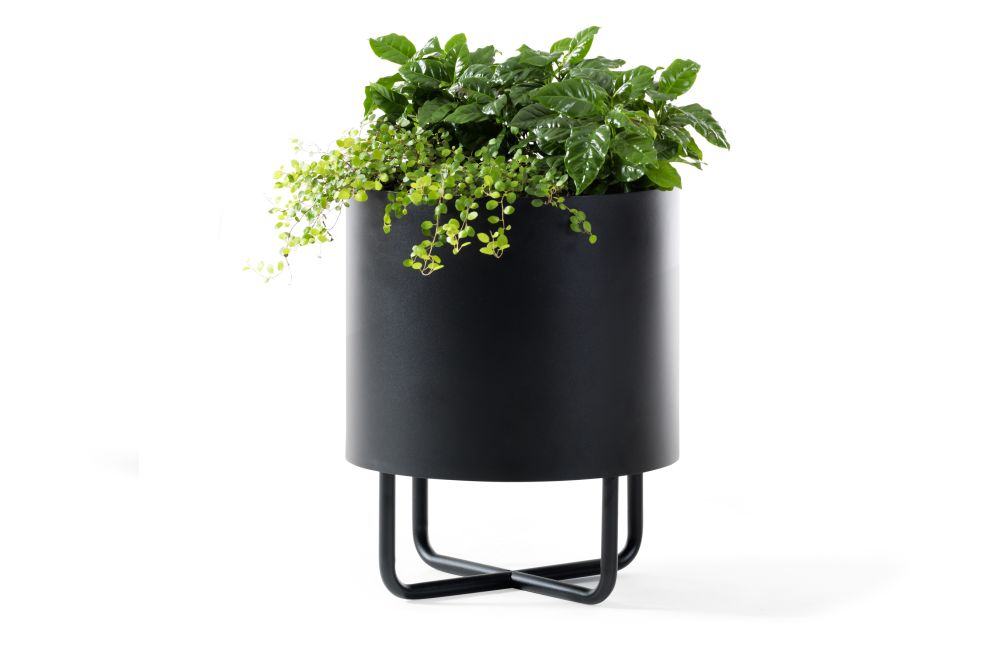 Black,Johanson,Workplace Accessories,flowerpot,houseplant,leaf,plant