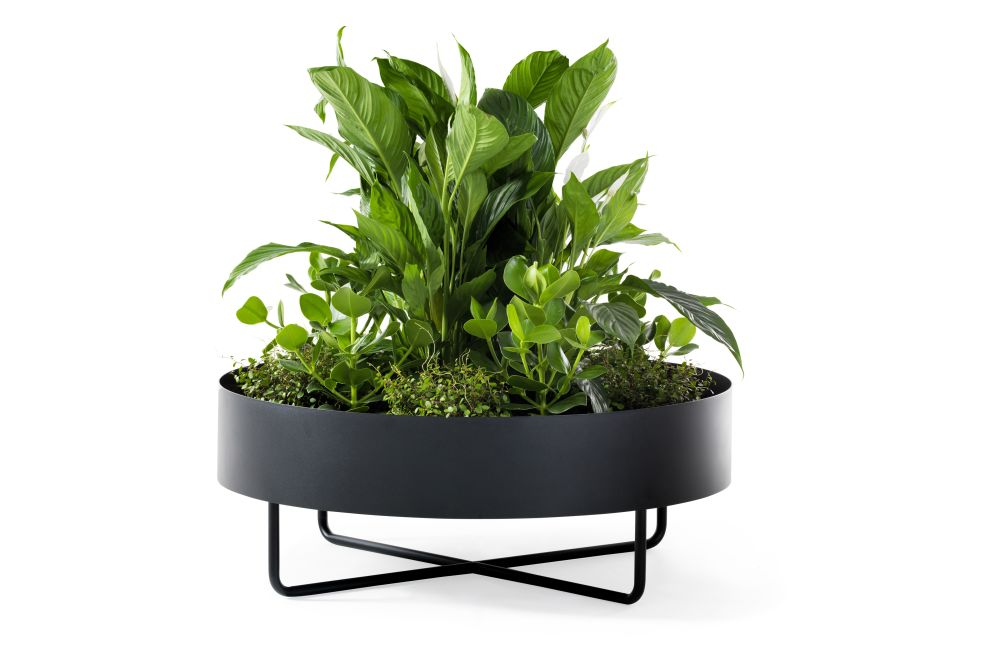 aquarium decor,flowerpot,grass,herb,houseplant,leaf,plant