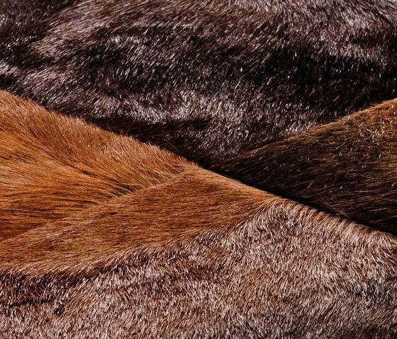 brown,close-up,fur