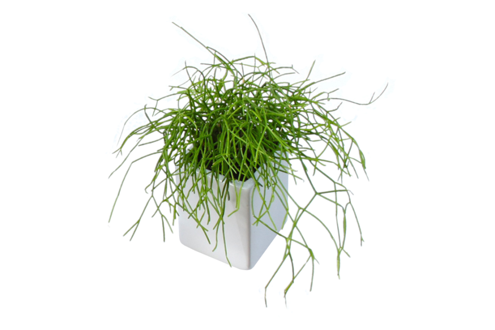 https://res.cloudinary.com/clippings/image/upload/t_big/dpr_auto,f_auto,w_auto/v2/products/off-the-wall-pots-white-large-thelermont-hupton-thelermont-hupton-clippings-1262441.png