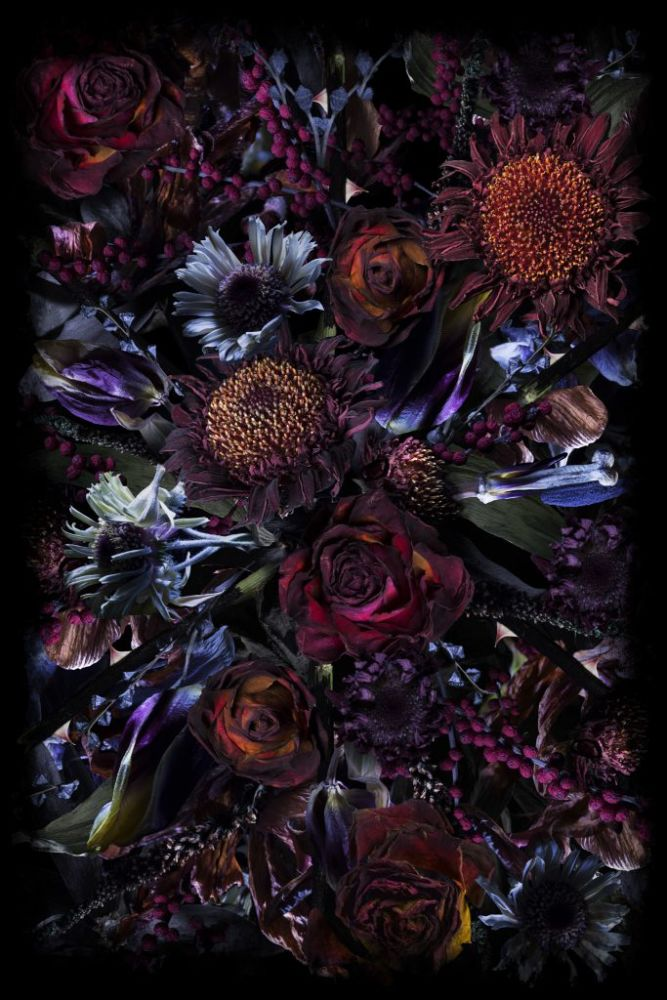 200 x 300 cm, Polyamide,Moooi Carpets,Rugs,flower,fractal art,lilac,plant,purple,still life,still life photography,violet