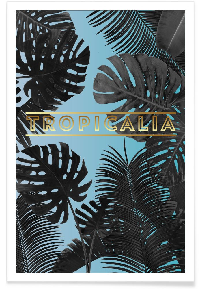 Tropicalia by UNTITLED STORY