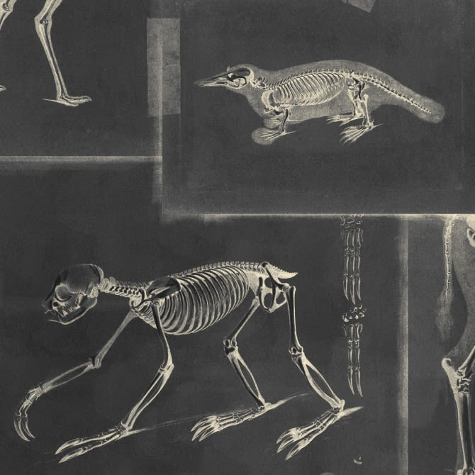 Zooarchaeology Anthracite Wallpaper by Mind The Gap