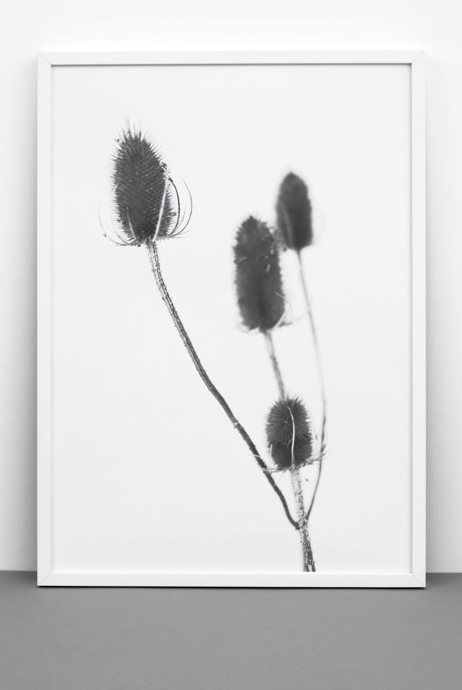 THISTLE PRINT by One Must Dash