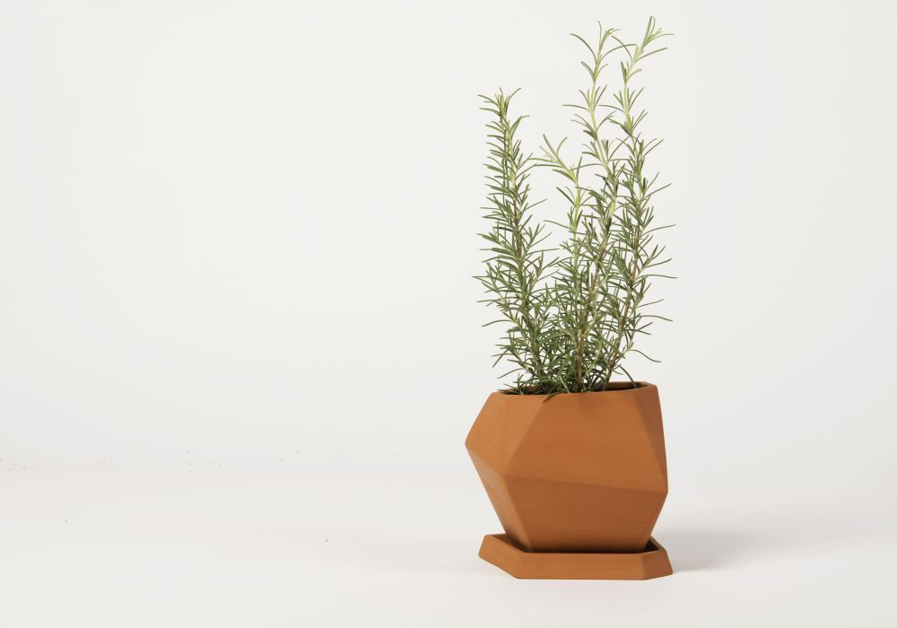 Unglazed (rosemary)