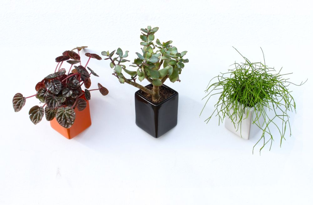 Off the Wall Pots by Thelermont Hupton