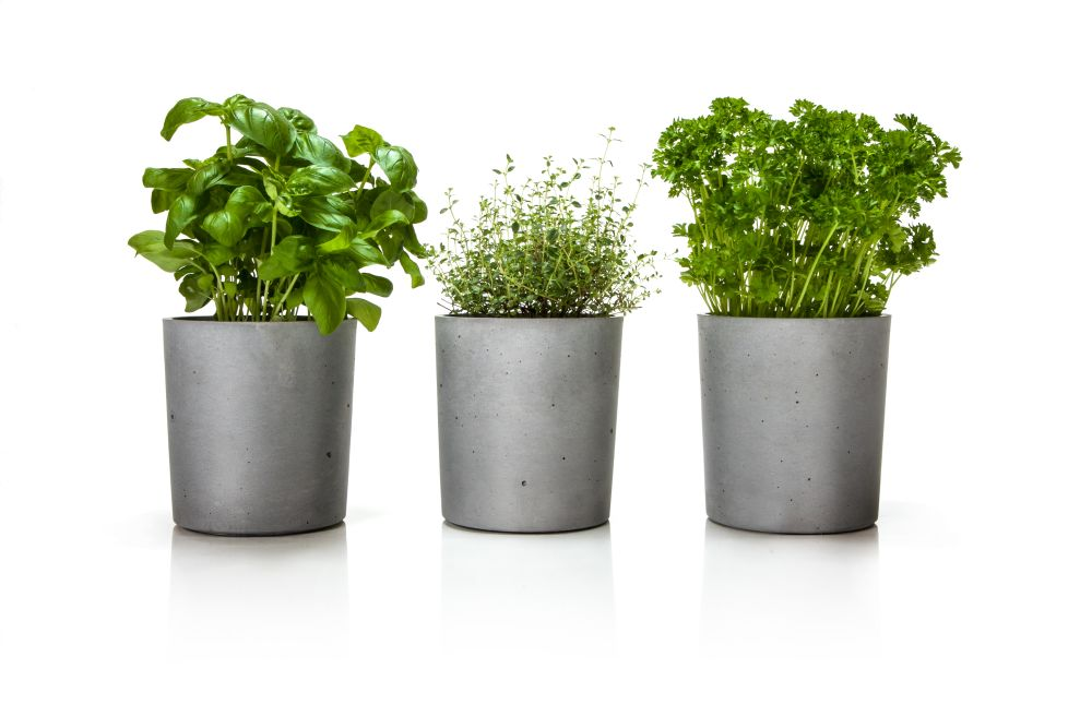 Spicepot - Set of 3 by Urbanature