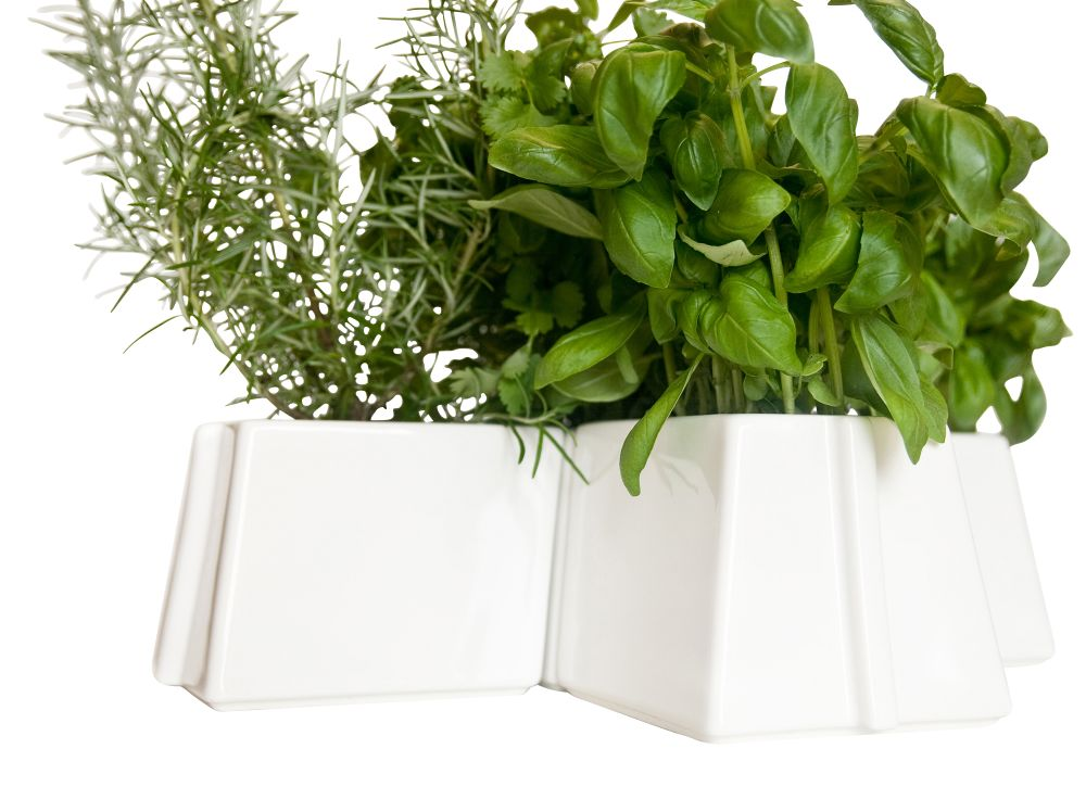 X Tray 5 Plant Pots Set by Vitamin