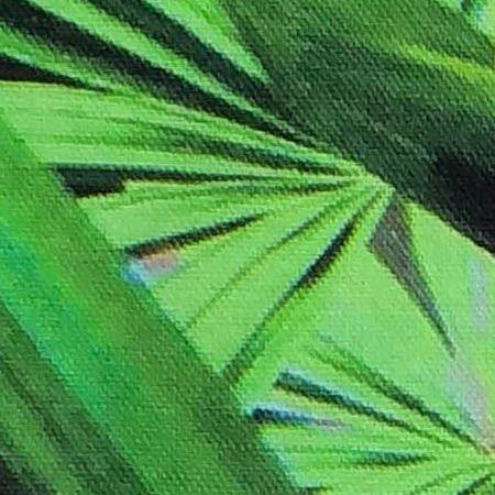 Zingy Palm Print Rectangular Cushion by Suzanne Goodwin