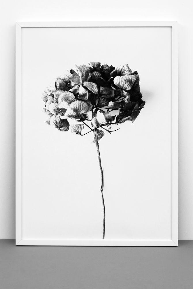 Hydrangea Print by One Must Dash