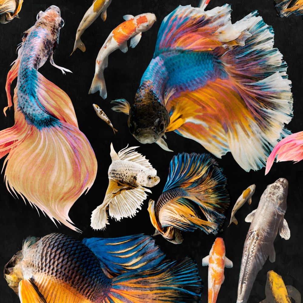 Goldfish Wallpaper by Mind The Gap