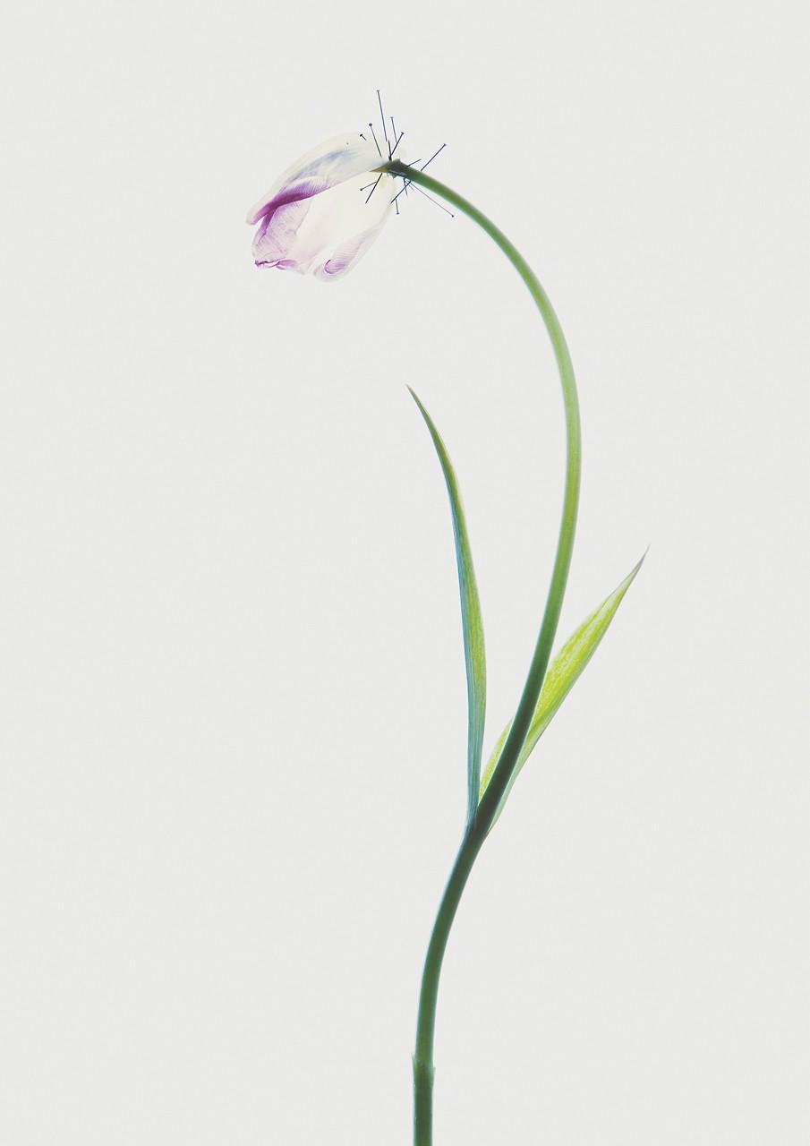 Untitled #01 18 x 25cm-150