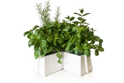 X Tray 5 Plant Pots Set White