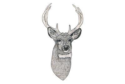 Animal Illustration Deer in the Wood Deer