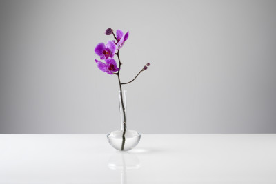 Gauge Vase Single Stem, Clear, 17cm High