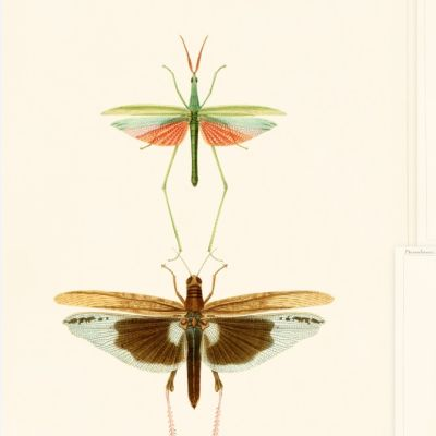 Entomology Wallpaper