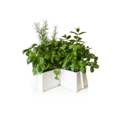 X Tray 5 Plant Pots Set White