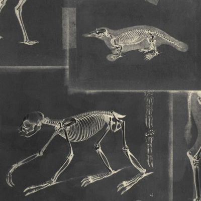 Zooarchaeology Anthracite Wallpaper