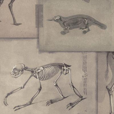 Zooarchaeology Wallpaper