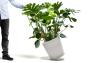 white Trolley with Monstera