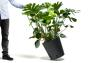 grey Trolley with Monstera