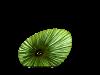 Doe in Grass silk colour