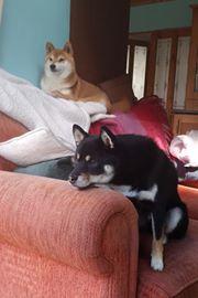 Yoshi & Ryuu