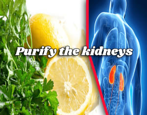 cleansing the kidney