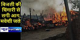 BODHGAYA NEWS: अगलगी में चार झोपड़ियां जलकर राख, कई मवेशियों की मौत