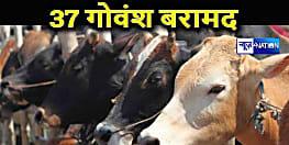 कुशीनगर पुलिस ने 37 गोवंश को किया बरामद, एक तस्कर भी गिरफ्तार