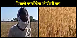 किसानों पर कोरोना की दोहरी मार : खेत में फसल तैयार, कोरोना और पुलिस के डर से नहीं मिल रहे कटाईदार