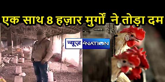 बिहार के एक गांव में आखिर कैसे एक साथ 8 हज़ार मुर्गों  ने तोड़ा दम, लोगों में भय का माहौल