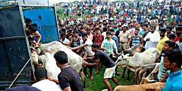 बकरीद से ठीक पहले पुलिस की बड़ी कार्रवाई, एक दर्जन से अधिक गोवंश पशु बरामद