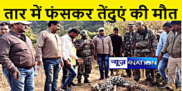 जंगली सूअर को फंसाने के लिए बिछाये लोहे की तार में फंस गया तेंदुआ, तड़प तड़प कर हुई मौत