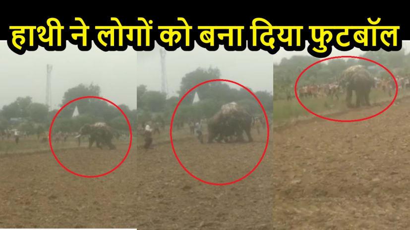 BIHAR NEWS: गजराज के प्रकोप से सहमा गांव!  6 लोगों को सूंड में लपेटकर पटका, खूब मचाई तोड़फोड़
