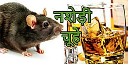 नशेड़ी चूहों से परेशान है उत्पाद विभाग, अबतक गटक चुके हैं लाखों के केन बीयर