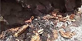 वन विभाग की लापरवाही: पानी के अभाव में सौ से अधिक बंदरों की हुई मौत